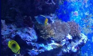 【画像多数あり】沖縄美ら海水族館に行ってきました。G.Wにオススメ!