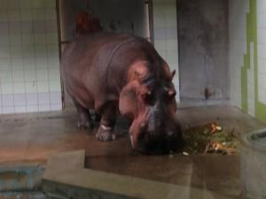 愛媛県立にあるとべ動物園に行ってきたので写真とか感想とか。